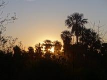 Zonsondergang, palmen en bomen Royalty-vrije Stock Foto
