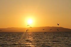 Zonsondergang in Paracas Stock Afbeelding