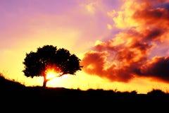 Zonsondergang rood en magenta met eiken boom Royalty-vrije Stock Afbeeldingen