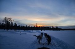 Zonsondergang Rovaniemi Finland stock fotografie