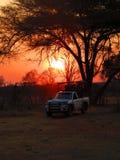 Zonsondergang in safari stock foto