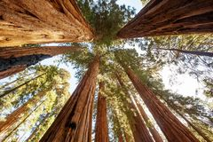 Zonsondergang in Sequoia nationaal park in Californië, de V.S. royalty-vrije stock foto