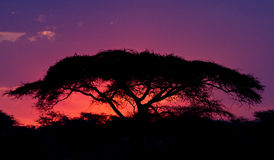 Zonsondergang in Serengeti Stock Foto