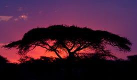 Zonsondergang in Serengeti stock foto