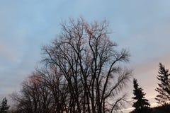 Zonsondergang silhoutte stock afbeeldingen
