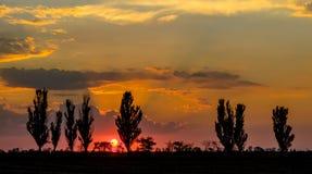 Zonsondergang tegen de achtergrond van lange bomen en wolken Stock Fotografie