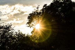 Zonsondergang througt de boom stock foto's