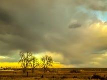 Zonsondergang Timelapse met Bomen op Horizon van Oostelijke Vlaktes Colorado stock footage