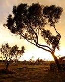 Zonsondergang in Tunesië stock fotografie