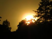 Zonsondergang tussen bomen royalty-vrije stock foto