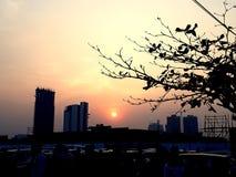 Zonsondergang tussen de in aanbouw hoge stijgingsbouw met kleurrijke hemelboom en mensen stock fotografie
