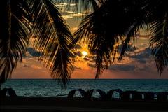 Zonsondergang tussen de palmen royalty-vrije stock afbeeldingen