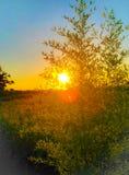 Zonsondergang tussen het bamboe stock afbeelding