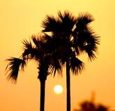 Zonsondergang tussen palmen Royalty-vrije Stock Foto