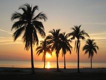 Zonsondergang tussen palmen en overzees in Cuba Stock Afbeeldingen