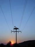 Zonsondergang van de ooievaars de elektrische kabel Stock Afbeeldingen