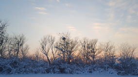 Zonsondergang van de winter Stock Afbeeldingen