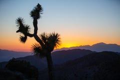 Zonsondergang van het nationale park van de joshuaboom stock foto's