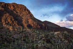 Zonsondergang van het Saguaro de Nationale Park stock afbeelding