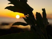 Zonsondergang in Vigo, Spanje Royalty-vrije Stock Afbeelding