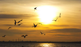 Zonsondergang Vogelssilhouetten en zon Stock Afbeelding