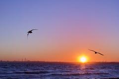 Zonsondergang Vogelssilhouetten, zon en het overzees Stock Foto