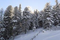 Zonsondergang voor het snow-covered bos Stock Afbeeldingen