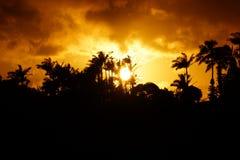 Zonsondergang voorbij tropisch silhouet van bomen Stock Afbeelding