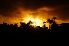 Zonsondergang voorbij tropisch silhouet van bomen Stock Fotografie