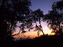 Zonsondergang voorbij tropisch silhouet van bomen Royalty-vrije Stock Afbeeldingen