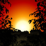 Zonsondergang in Wildernis Stock Fotografie