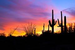 Zonsondergang in woestijn. Stock Fotografie