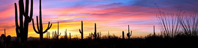 Zonsondergang in woestijn. stock afbeelding