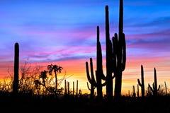 Zonsondergang in woestijn. royalty-vrije stock fotografie
