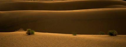 Zonsondergang in woestijn Stock Foto
