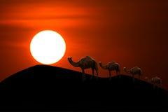 Zonsondergang in woestijn met kameelcaravan die door de zandduinen gaan Royalty-vrije Stock Afbeeldingen