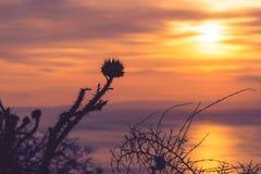 Zonsondergang of zonsopgang over overzeese oppervlakte Royalty-vrije Stock Afbeeldingen