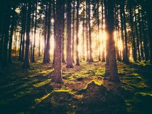 Zonsondergangbomen Stock Fotografie