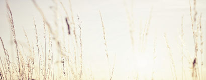 Zonsonderganggras Stock Foto