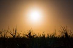Zonsonderganggras op eiland Stock Afbeeldingen