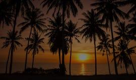 Zonsondergangkokospalmen stock fotografie