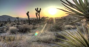 Zonsonderganglandschap in Joshua Tree National Park stock footage