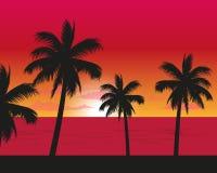Zonsonderganglandschap van de strandkant Stock Afbeelding