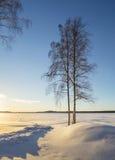 Zonsonderganglichten en schaduwen in de winterlandschap met alleen boom Stock Afbeeldingen