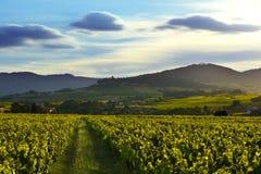Zonsonderganglichten over wijngaarden en bergen, Beaujolais, Frankrijk Stock Foto