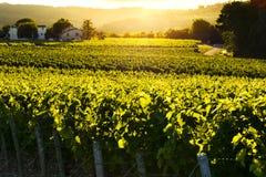 Zonsonderganglichten over wijngaarden, Frankrijk Stock Foto's