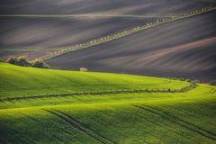 Zonsonderganglijnen en golven met bomen in de lente royalty-vrije stock afbeeldingen
