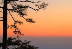 Zonsondergangmening met boomsilhouet Royalty-vrije Stock Foto's