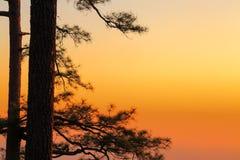 Zonsondergangmening met boomsilhouet Stock Foto's