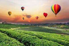 Zonsondergangmening van het landschap van de theeaanplanting royalty-vrije stock afbeeldingen